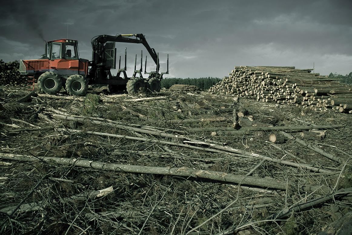 Deforestazione: ogni minuto rasi al suolo 50 campi di calcio di foreste
